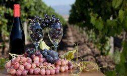 Wein Infos
